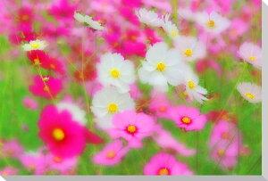 バラ 風景写真パネル 53×33.3cm IBA-001-m10 【楽ギフ_包装】 【楽ギフ_のし宛書】 【楽ギフ_名入れ】壁飾りやインテリアに美しい風景写真パネルを。ディスプレイ 模様替え タペストリー 風景