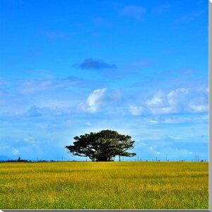 沖縄 黒島 1本の木 グラフィックアート 風景写真パネル ウォールアート インテリア おしゃれ 新築祝い 引っ越し祝い 記念日 プレゼント 贈答品 oki-014-s12 【楽ギフ 包装】