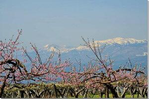風景写真パネル 福島 吾妻と桃と梨の花 65.2×45.5cm FUK-236-m15絵画 アートなディスプレイや模様替え タペストリーなどに。新築祝い 出産祝い 結婚祝い プレゼントに喜ばれます。【楽ギフ_包