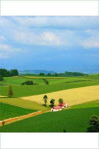 ポストカード5枚で【送料無料】北海道 美瑛 赤い屋根の家 PST-118壁飾りやインテリアに北海道の風景を。絵はがき/ポストカード(北海道) 美しい風景写真を、クリスマスカード,残暑見舞い(夏