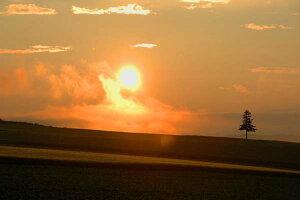 ポストカード5枚で【送料無料】北海道 美瑛 夕日と木 風景 写真 ギフト お祝い プレゼント お手紙 旅の思い出 PST-121美しい風景写真のポストカードや絵はがきはいかがですか? クリスマスカ