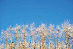 ポストカード5枚で【送料無料】アラスカ・フェアバンクス 霧氷の木々 PST-150美しい風景写真のポストカードや絵はがきはいかがですか? 冬景色のクリスマスカード寒中見舞い年賀状グリ