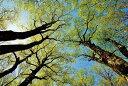 ポストカード ブナッ子路 木漏れ日 福島土湯峠 風景写真 どれでも5枚で【送料無料】pst-167 絵はがき 絵葉書 クリスマスカード 暑中見舞い 寒中見舞いグリーティングカード 年賀ハガキ 年賀状などにどうぞ。【RCP】