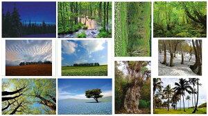 ポストカード いろいろな風景と木々 お得な11枚セット 送料無料 美しい風景写真 ポストカード 絵はがきは 風景 写真 ギフト お祝い クリスマスカード残暑見舞い年賀状 グリーティングカー