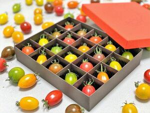 20色カラフルミニトマト 熊本産20粒