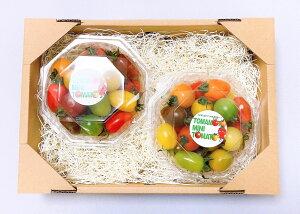 カラフルミニトマト 熊本県産 限定300箱