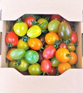カラフルミニトマト【15〜20種】1kg