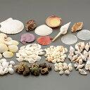 シェル アソート 1kg 【 工作 作品 飾り デコ素材 アクセサリー ジオラマ 貝殻 DIY 】