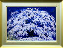 【絵画インテリア】【送料無料】中島千波「春の宵 枝垂桜」作品保証書・展示用フック付 限定200部シルクスクリーン 【…