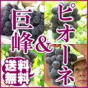 【訳あり】ぶどう 巨峰&ピオーネ(2kg)【送料無料】