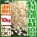 お米10kg 玄米 白米 コシヒカリ 特別栽培米【当日精米】【送料無料】