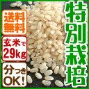玄米(29kg)白米 兵庫県産コシヒカリ 特別栽培米有機肥料【同梱不可】【送料無料】