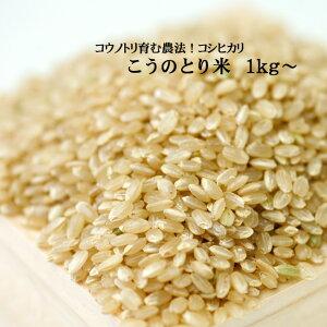 こうのとり米(1kg)玄米・白米 コウノトリ育む農法 兵庫県産コシヒカリ【当日精米】
