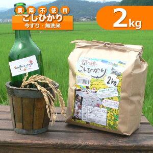 【新米】玄米 白米 今ずり米 無洗米 農薬不使用 コシヒカリ 令和2年産【2kg】