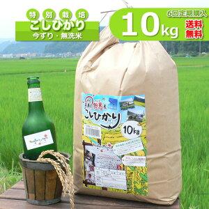 【新米】【定期購入】10kgx6回 玄米 白米 今ずり米 無洗米 減農薬・特別栽培米 コシヒカリ 令和2年産