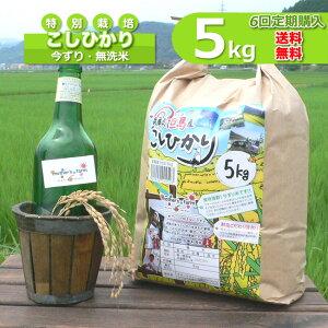 【定期購入】5kgx6回 玄米 白米 今ずり米 無洗米 減農薬・特別栽培米 コシヒカリ 令和2年産