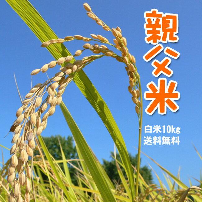 コシヒカリ 10kg お米 白米 親父米 兵庫県産 平成29年産【送料無料】