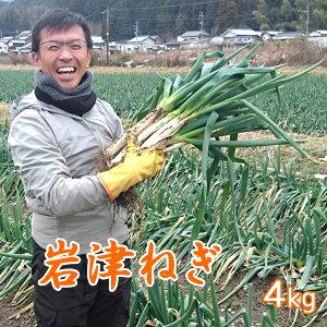 【予約】岩津ねぎ ネギ 産地直送 朝来特産 訳あり 4kg【送料無料】
