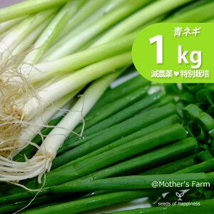 青ネギ あおねぎ ネギ 農薬90%カット 特別栽培【1kg】