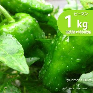ピーマン 農薬90%カット 特別栽培【1kg】