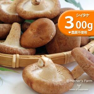 シイタケ しいたけ 椎茸 菌床栽培【300g】