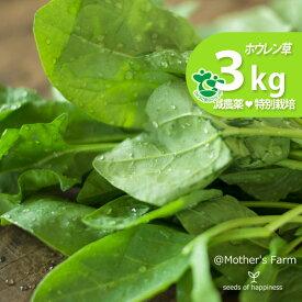 ほうれん草 ホウレン草 農薬90%カット 特別栽培【3kg】
