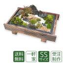 【お中元】苔盆栽 ミニ庭園 一軒家SS【送料無料】