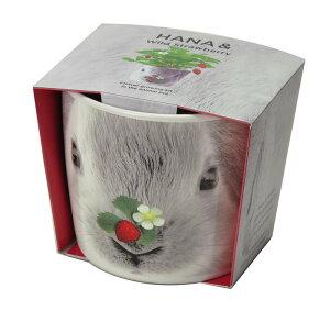 聖新陶芸ハナ&アニマルズウサギワイルドストロベリーハーブ栽培セットプレゼントインテリア景品ギフト