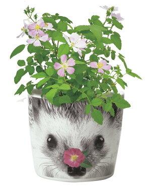 聖新陶芸ハナ&アニマルズハリネズミミニバラギフトプレゼントインテリアお花栽培セット景品