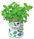 聖新陶芸 育てるグリーンペット ミント 景品 底面給水 ギフト ハーブ栽培セット インテリア プレゼント