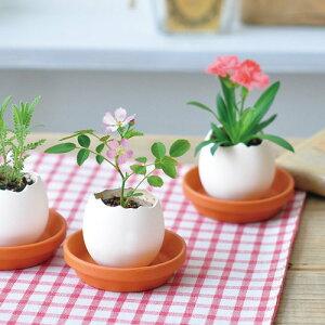 聖新陶芸エッグリングエコフレンドリーカーネーションギフト景品プチプラ栽培セットプレゼントグリーン植物ガーデニング