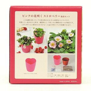 ピンクの花咲くストロベリー栽培セット観葉植物ガーデニング聖新陶芸ギフトプレゼント景品