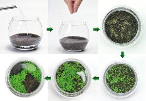 育てる水草(L)観葉植物ガーデニング聖新陶芸ギフトプレゼント景品