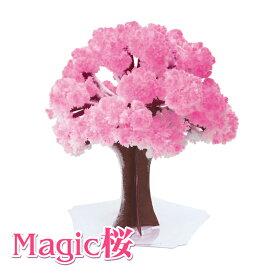 【メール便対応1個まで】Magic桜 マジックさくら まじっくさくら プチギフト パーティーグッズ 雑貨
