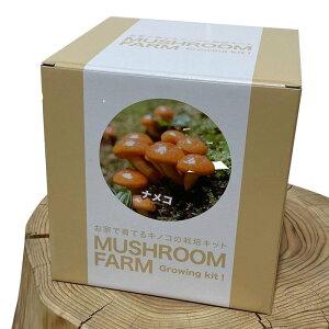 10月中旬入荷予約 マッシュルームファーム MUSHROOM FARM ナメコ MF-053 プレゼント インテリア雑貨 きのこ ガーデニング ギフト なめこ 景品 キノコ栽培キット