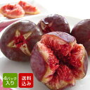 イチジク 蓬莱柿 4パック入 特別栽培 無花果 いちじく ほうらいし 福岡産