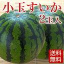 【送料無料】小玉スイカ 2玉 熊本産 母の日 スイカ割り すいか/西瓜/熊本すいか