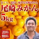 尾崎みかん 5kg 小玉みかん 大分県産 お歳暮 年末【送料無料】