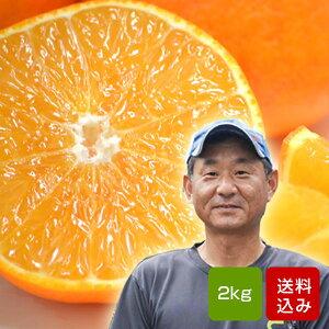 天草オレンジ 2kg 国産オレンジ 大分産 お歳暮