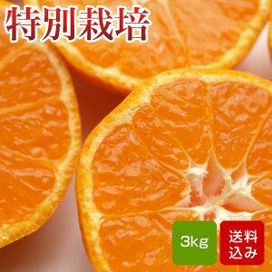 特別栽培 温州みかん 3kg 熊本県産 ギフト