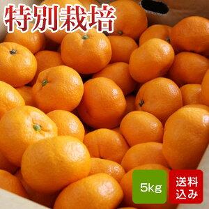 特別栽培 温州みかん 5kg 熊本県産 ギフト