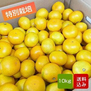 特別栽培 温州みかん 10kg 熊本県産 ギフト