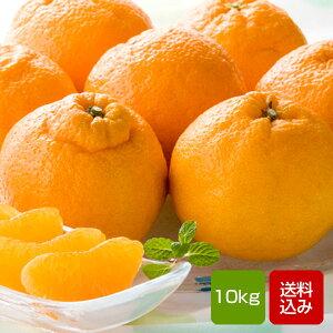 デコポン 10kg ご家庭用 ギフト 熊本県産