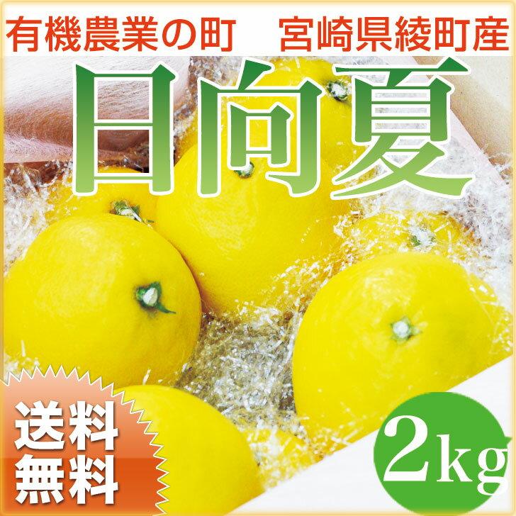 【送料無料】日向夏 2kg 宮崎県綾町産 ニューサマーオレンジ 内祝 誕生日 ギフト