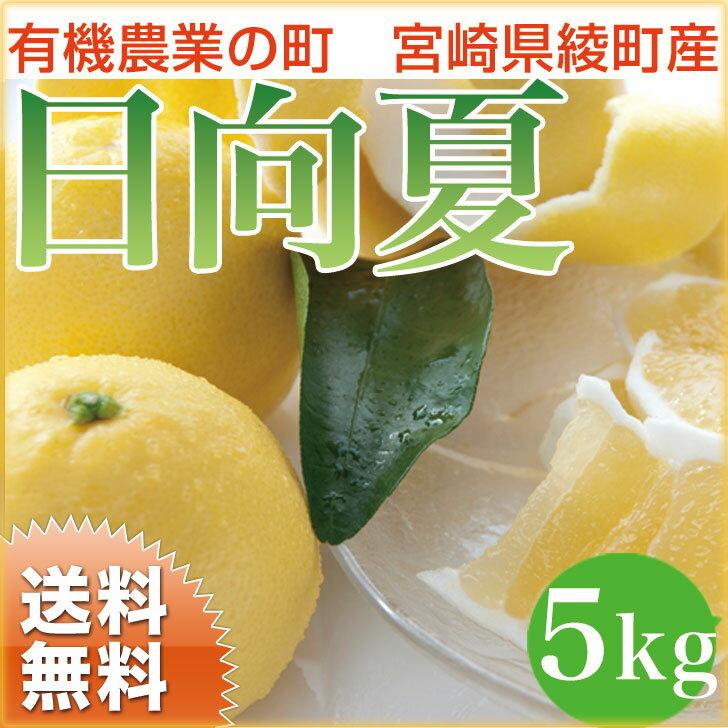 【送料無料】日向夏 5kg 宮崎県綾町産 ニューサマーオレンジ 内祝 誕生日 ギフト