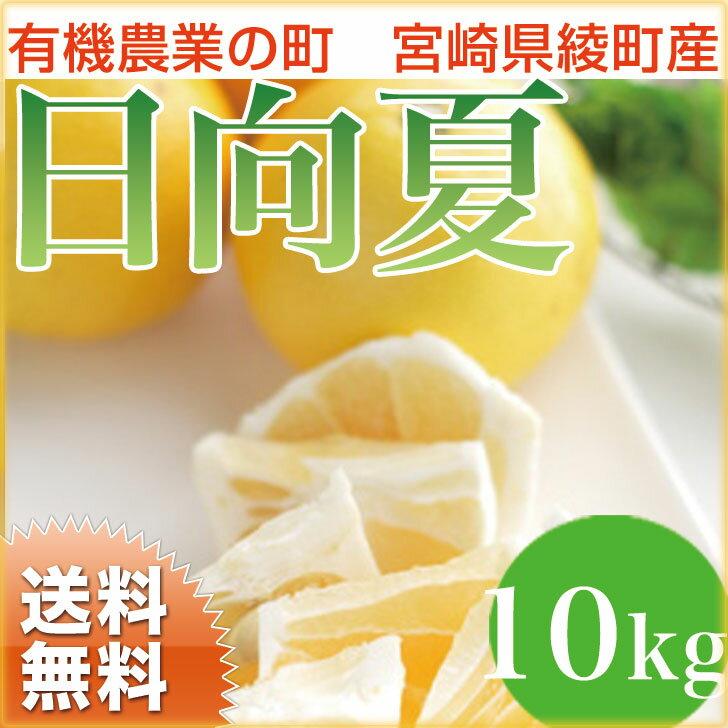 【送料無料】日向夏 10kg 宮崎県綾町産 ニューサマーオレンジ 内祝 誕生日 ギフト