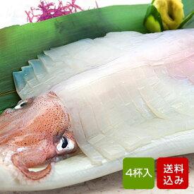 イカ 姿造り 2種 計4杯入 玄界灘(九州産) 剣先イカ スルメイカ イカ 海鮮 ギフト