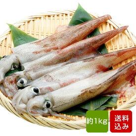 ヤリイカ 1kg 槍イカ あしやんいか 一本槍イカ 生いか 福岡県産 冷凍