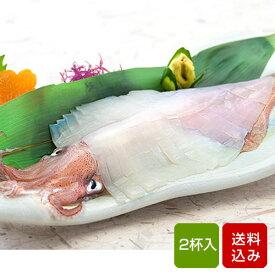 イカ 刺身用 2杯 呼子イカ 姿造り 玄界灘 おつまみ 海鮮 ギフト