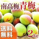 南高梅 青梅 2kg 梅酒 梅ジュース 梅エキス に最適 生梅 大分産 【送料無料】